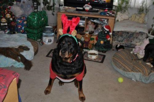 sassy reindeer 2010