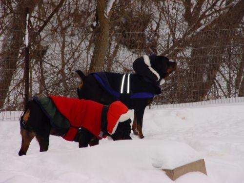 Sassy & Bosch snow storm 12-27-09