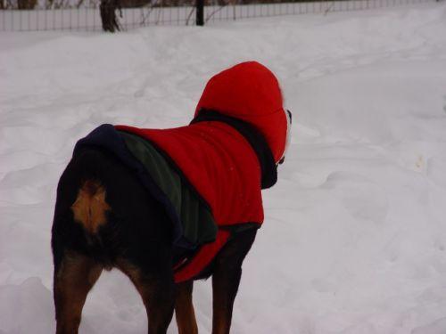 Sassy & new hat 12-27-09