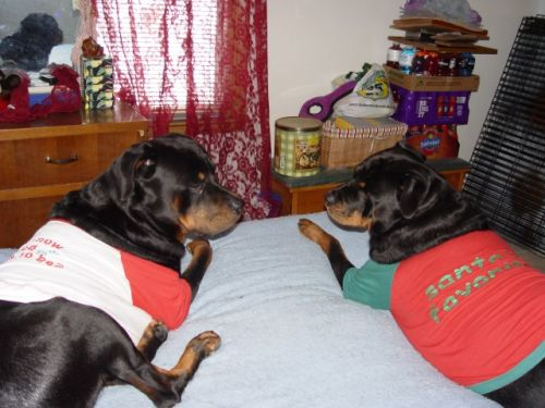 Bosch & Sassy on bed 12-25-09