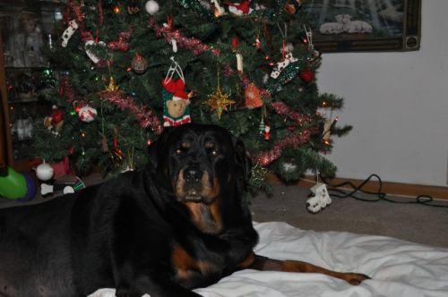 christmas 2012 (3)